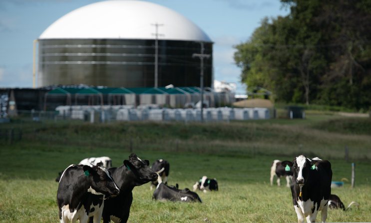 A photograph of cows in front of an anaerobic digester at Michigan State University.