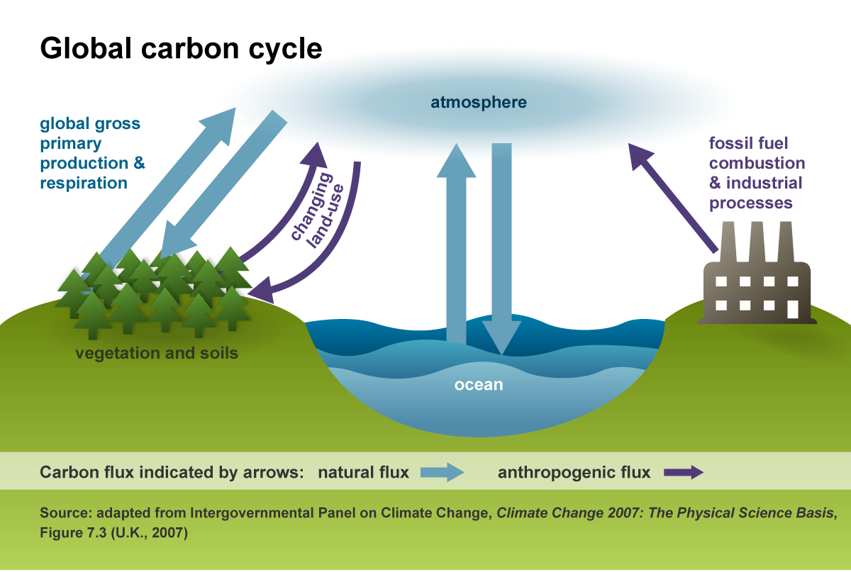 An illustration of the global carbon cycle.